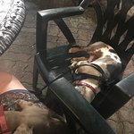 Brady & Brie chilling while I enjoyed the food & atmosphere