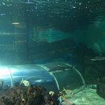 Valokuva: Blue Reef Aquarium Hastings
