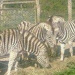 Zebra at Manor Wildlife Park