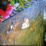 Stream below the patio