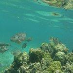 Photo of Roatan Divers