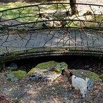 Photo of Parc aux animaux du Bois-de-la-Batie
