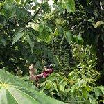 The best Zipline Park in Puerto Rico!