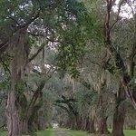 Foto de Evergreen Plantation
