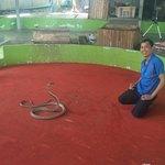 Foto de Phuket Cobra Show and Snake Farm