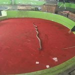 Foto de Phuket Cobra Show and Snake Farm