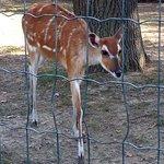 Fotografia de Zagreb Zoo