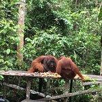 Фотография Wild Orangutan Tours - Day Tours