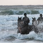 Swimming with horses at Puur Terschelling