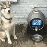 Paws in the Pub 2018