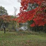 Billede af Golden Acre Park