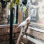 Foto The Log House 1776 Restaurant