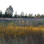 Photo de Woodland Lake Park