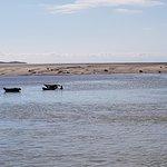Phoques de la baie d'Authie à Berck