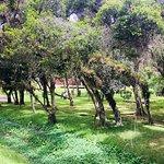 Vista do Passeio na Estrada de Ferro Campos do Jordão