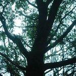 Photo of Sherwood Forest