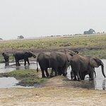 Bilde fra Bushtracks Africa Day Tours