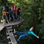 Swing Bridge - Original Canopy Tour