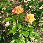 Little Treasures of Rosecliff Gardens