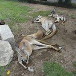 ภาพถ่ายของ Kobe Animal Kingdom