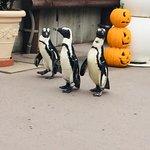 橫濱・八景島海洋樂園照片