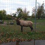 Foto de Gaylord's City Elk Park