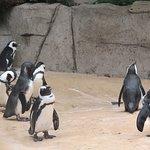 Foto van Dallas Zoo