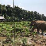 Foto de MandaLao Elephant Conservation