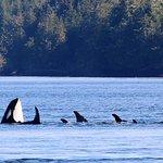 Bilde fra Stubbs Island Whale Watching