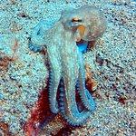 Bild från Manta Diving Lanzarote