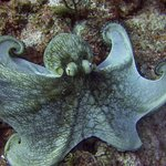 Octopus on our dive
