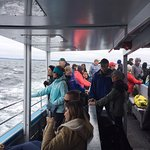 Photo of Mariner Cruises Whale and Seabird Tours