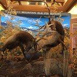 صورة فوتوغرافية لـ Rocky Mountain Elk Foundation