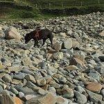 Bilde fra Widemouth Bay Beach