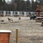 Φωτογραφία: Holmen Husky - Dog Sledding Tours