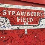 Famous Strawberry 🍓 fields
