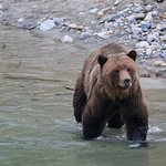 Foto Homalco Wildlife Tours