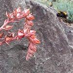 Wellington Botanic Garden Foto