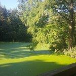 Bilde fra Alcsut Arboretum