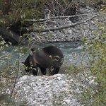 Photo de Aboriginal Journeys Wildlife and Adventure Tours