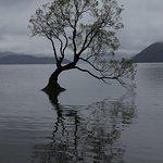 That Wanaka Tree (4)