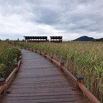 Photo of Suncheon Bay Wetland Reserve