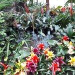 Foto de Sheffield Winter Garden