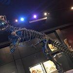 Canterbury Museum Foto