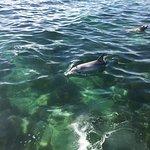 Bilde fra Baird Bay Ocean Eco Experience