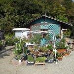 Фотография Ikuta Ryokuchi Rose Garden