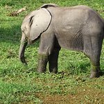 Baby Elefant, Amboseli National Park