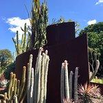 Cactus and succulent garden, Sydney Botanical Gardens