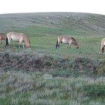 Photo of Hustai National Park