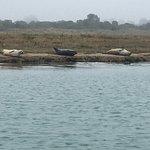 Photo de Dover Sea Safari